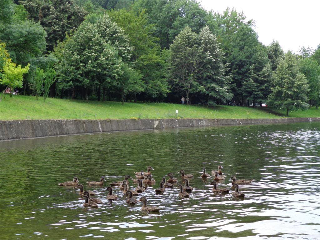 Хотел ПАРК Бачиново Свободни животни в паркът